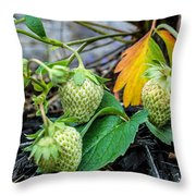 Strawberries - Soon To Be Picked Throw Pillow