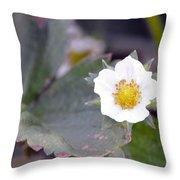 Strawberrys Flower Throw Pillow