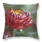 Strawflower Throw Pillow