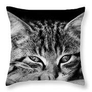 Stray Kitten Throw Pillow