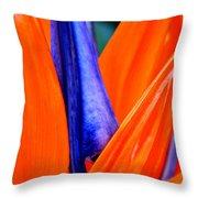 Strelitzia Colour Throw Pillow