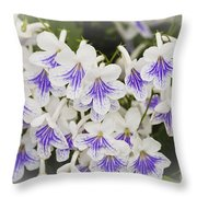 Streptocarpus Throw Pillow