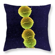 Streptococcus Bacteria Sem Throw Pillow by Science Source