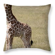 Stretch Throw Pillow by Lori Tambakis