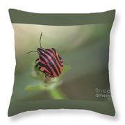 Striped Bug Throw Pillow