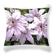 Striped Clematis Throw Pillow