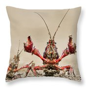 Striped Crayfish  Throw Pillow