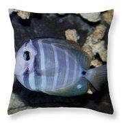 Striped Fish Throw Pillow