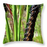 Striped Oak Worm Throw Pillow
