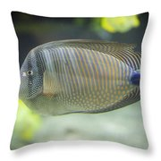 Striped Tropical Fish Desjardini Tang Throw Pillow