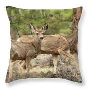 Strolling Through The Rockies Throw Pillow