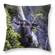 Stubbs Throw Pillow
