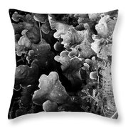 Study In Black And White 1 Throw Pillow by Steve Patton