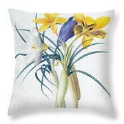 Study Of Four Species Of Crocus Throw Pillow