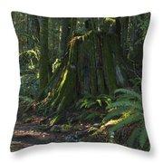 Stump And Fern Throw Pillow