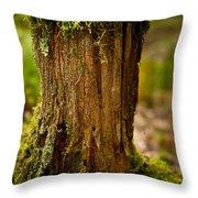 Stump Throw Pillow by Shane Holsclaw