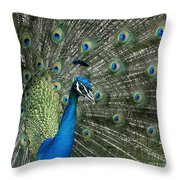 Stunning 2 Throw Pillow
