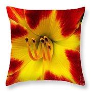 Stunning Daylily  Throw Pillow