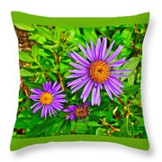 Subalpine Daisy By Vidae Falls In Crater Lake National Park-oregon  Throw Pillow