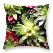 Succulent Beauties Throw Pillow