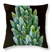 Succulent Bloom Throw Pillow