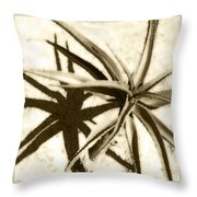 Succulent Under The Scorching Desert Sun Throw Pillow