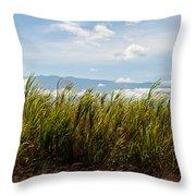 Sugar Cane Field - Maui Throw Pillow