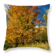 Sugar Maple 3 Throw Pillow