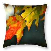Sugar Maple Fall Colors Throw Pillow