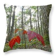 Sugar Maple In Old-growth Canadian Throw Pillow