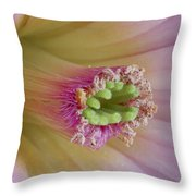 Suger Coated Throw Pillow