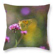 Sulphur Butterfly On Verbena Flower Throw Pillow