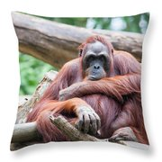Sumatran Orang Utan Throw Pillow
