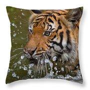 Sumatran Tiger Splashing In The Water Throw Pillow