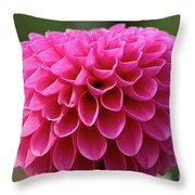 Summer Celebrated Throw Pillow