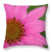 Summer Coneflower Throw Pillow
