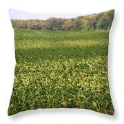 Summer Farm Field Throw Pillow