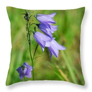 Summer Flowering Harebell Throw Pillow