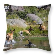 Summer Morning Dip - Elk In Yellowstone National Park - Wyoming Throw Pillow