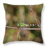 Summer Pondhawk Dragonfly Throw Pillow
