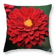 Fiery Red Dahlia Throw Pillow