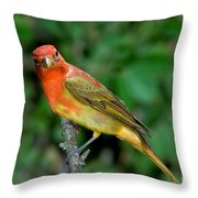 Summer Tanager Changing Color Throw Pillow