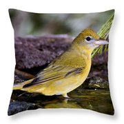 Summer Tanager Female In Water Throw Pillow