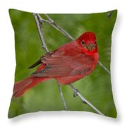 Summer Tanager Male Throw Pillow