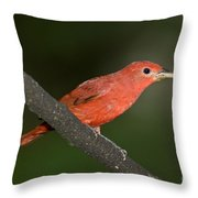 Summer Tanager Male Perched-ecuador Throw Pillow