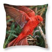 Summer Tanager Piranga Rubra Landing Throw Pillow