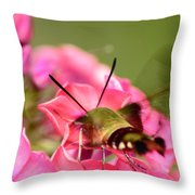 Summer Visitor Throw Pillow