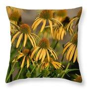 Summer Yellow Echinacea Flowers Throw Pillow