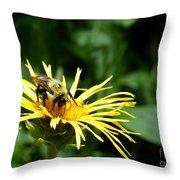 Summertime Bee Throw Pillow