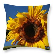 Sun Blessed Throw Pillow